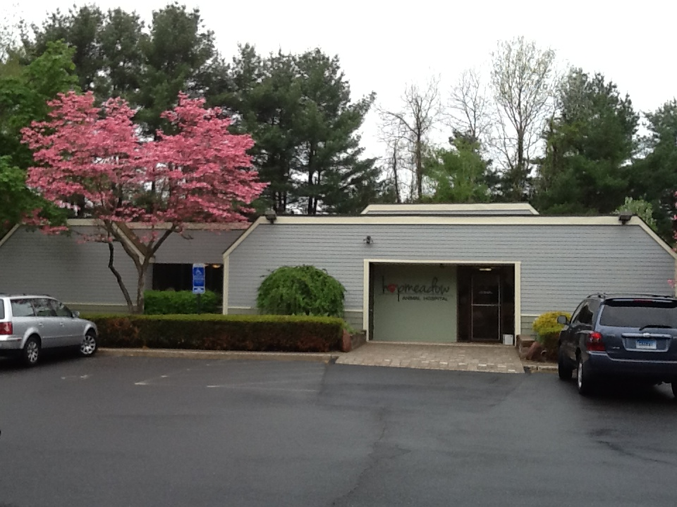 Hopmeadow Animal Hospital - Veterinarians serving Simsbury, Weatogue, and Avon, CT - Welcome to our site!